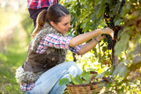 Woman picking grape