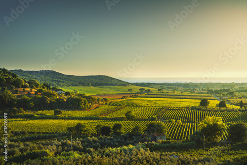 Panel Szklany Bolgheri and Castagneto vineyard aerial view on sunset. Maremma