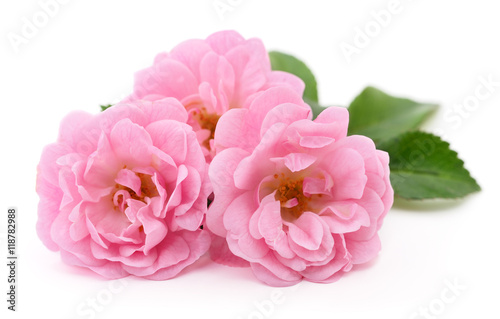 Zdjęcia na płótnie, fototapety, obrazy : Beautiful pink roses.
