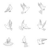 Dove vector set.