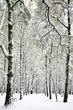 Suddenly fallen fluffy snow in the autumn birch forest
