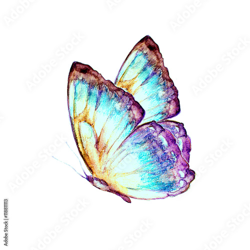 butterfly,watercolor, isolated on a white