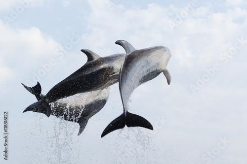 Poster Dauphin saut aquarium Kyoto