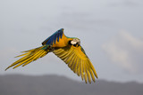 Motion blur Parrots flying in the sky.