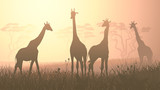 Horizontal illustration of wild giraffes in African savanna.
