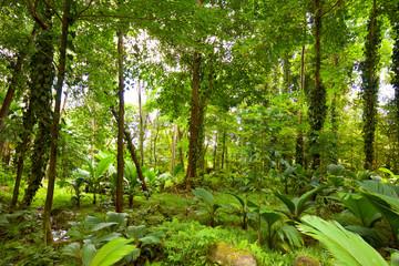 Tropical rain forest in Mahe Island, Seychelles