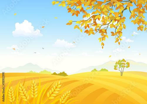 Aluminium Boerderij Field of wheat background