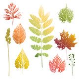 Collection of leaves and grass imprints - 118969769