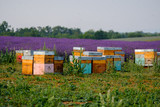 Fototapety Bee hives in Provence, France