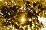sun in autumn trees