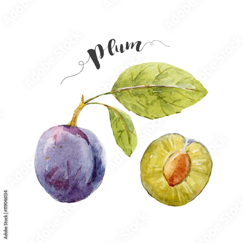 Watercolor hand drawn plum плакат