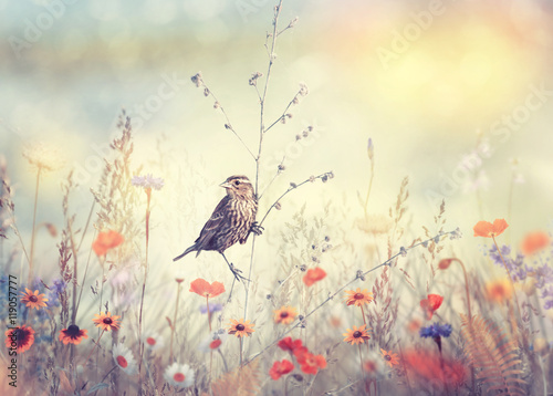 Fototapeta Field with wild flowers and a bird