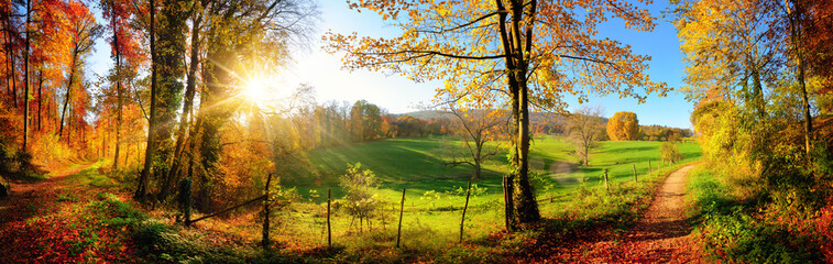 Fototapeta panorama lasu w słońcu
