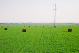 View of bright green summer field with hay stacks