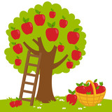 An apple tree, a ladder and a basket with harvested apples.  - 119123125