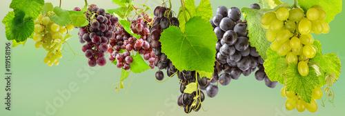 Fototapeta grappes de raisins