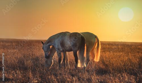 dwa-lekkie-konie-postawy-na-tle-zachodu-slonca