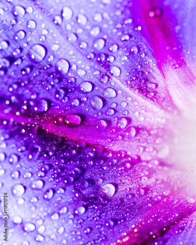 krople-wody-na-niebieski-kwiat