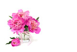 Pink peonies in small vase on a white background with space for text.