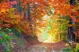 Amazing Autumn Fall Leaves colors in wild forest landscape