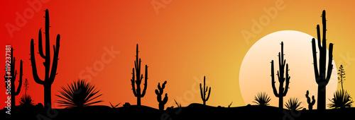 Mexico desert sunset.