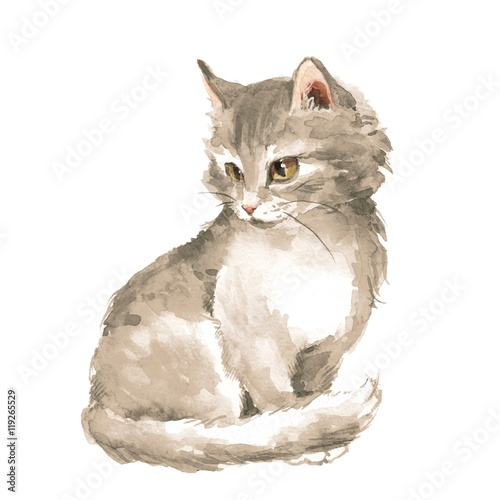 Cat 1. Gray fluffy kitten. Watercolor painting