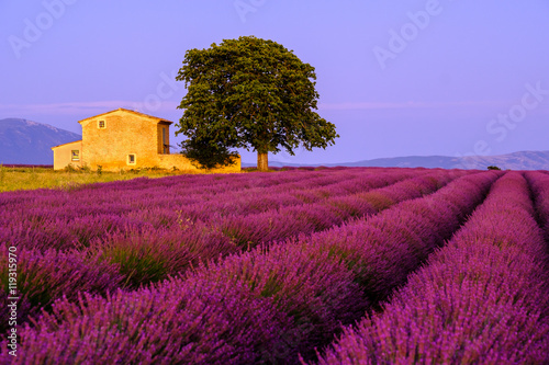 Keuken foto achterwand Crimson Lavender field at sunset in Provence, France