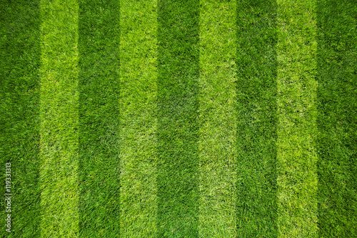 In de dag Gras grass