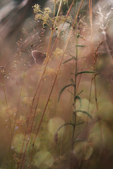 butterfly sitting on a branch © hitforsa