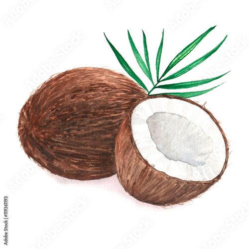 Poszter Hand drawn watercolor illustration of isolated coconut on the white background