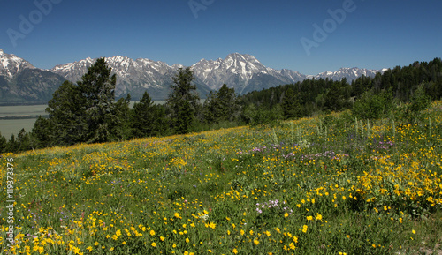 canvas print picture Teton Wildflowers