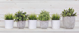 Pot plants in white pots and concrete on a background of white b - 119384925