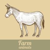 Donkey. Series vector illustration of farm animals. Style vintage engraving.