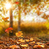 Fototapety Beautiful autumn landscape with yellow trees and sun.
