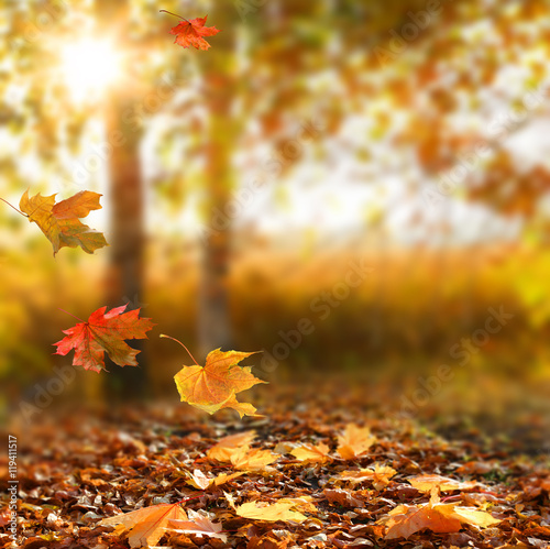 Beautiful autumn landscape with yellow trees and sun.