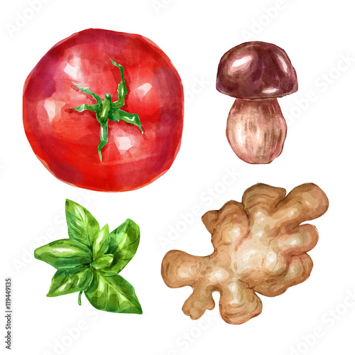 Poster Watercolor vegetables set with mint white mushroom tomato ginger