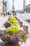 ST. PETERSBURG, RUSSIA, on August 18, 2016. Urban view. Flower stands with flowers on Nevsky Avenue