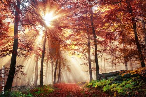 Faszinierende Lichtstimmung in einem bunten Wald im Herbst bei Sonnenschein im N Poster