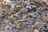Terremoto Amatrice, Italia - macerie