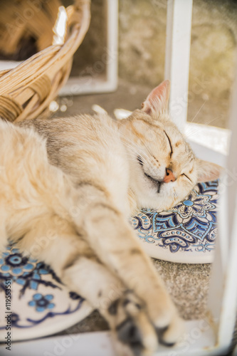 GREECE, SANTORINI - JULY 20, 2016: the cat sleeps on the Greek souvenir plates in a tourist gift shop