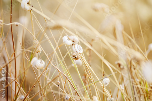 Wild meadow grass under morning sunlight. Autumn field with plenty small snails background. Sunny seasonal backdrop for your design