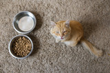 кот ест из миски
