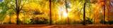 Panorama von einem herrlich schönen Wald im Herbst bei goldenem Sonnenschein
