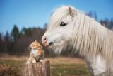 Fototapeta Child room - Little red kitten with white shetland pony © Grigorita Ko