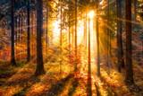Zalane słońcem jesień las