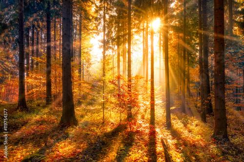 Zachodzące słońce na tle lasu