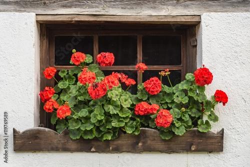 Fenster mit roten pelargonien plak t obraz na ze for Fenster 60x40