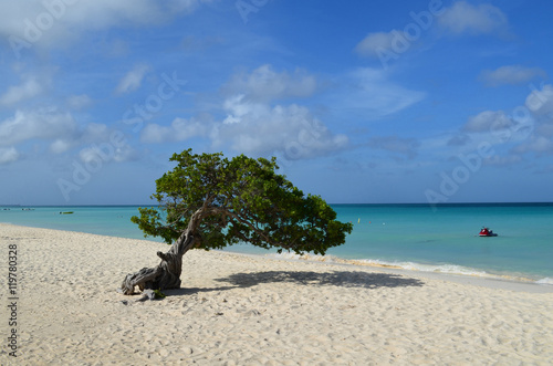 Poster Scenic Divi Divi Tree on Eagle Beach in Aruba
