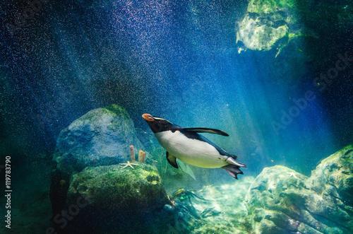 Fotobehang Pinguin Penguin diving