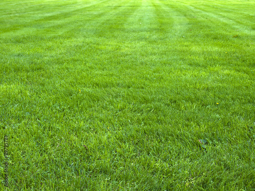 mata magnetyczna fresh spring green grass, green grass texture or background
